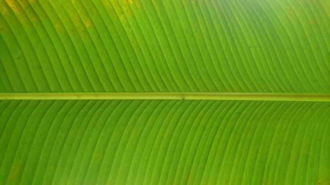 Regime rapide haricots verts